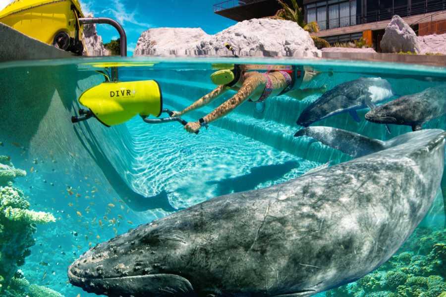 Blue Bay Dive & Watersports @Kunuku Resort - Virtual Reality Snorkeling