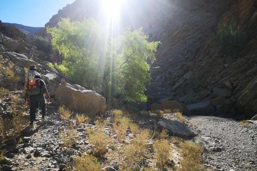 Absolute Adventure Hidden Oasis Linear Trek