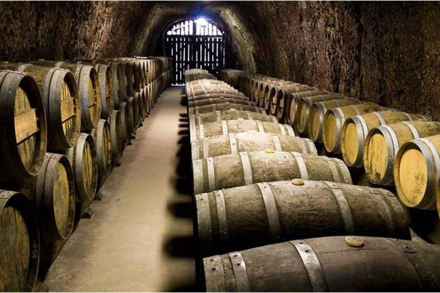 Visit Rimini Expériences Dans une Cave