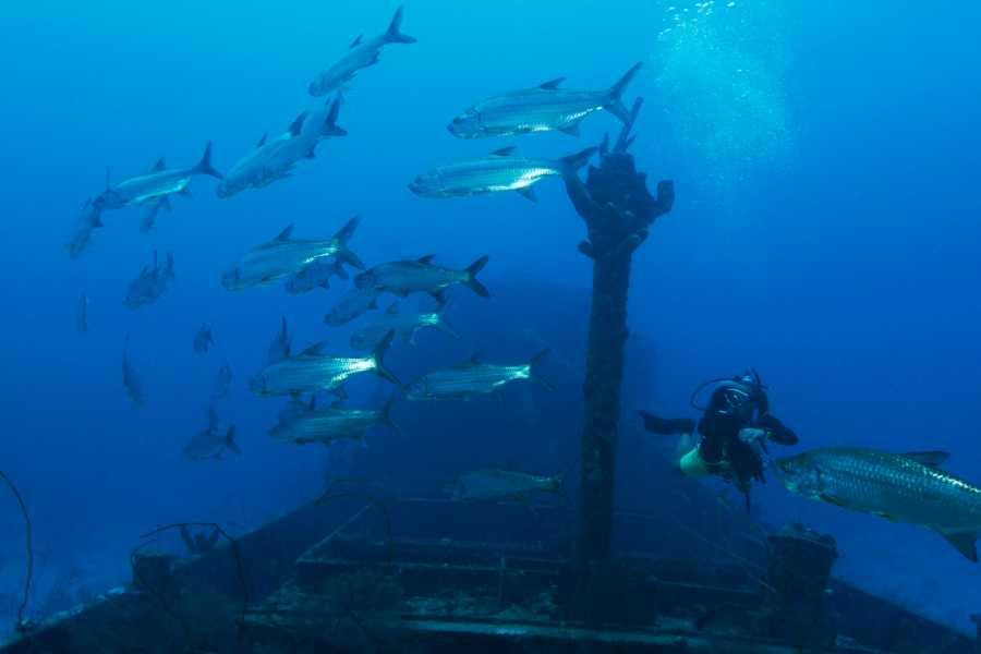 Blue Bay Dive & Watersports 2 Tank Geführter Bootsauchgang Superior Producer