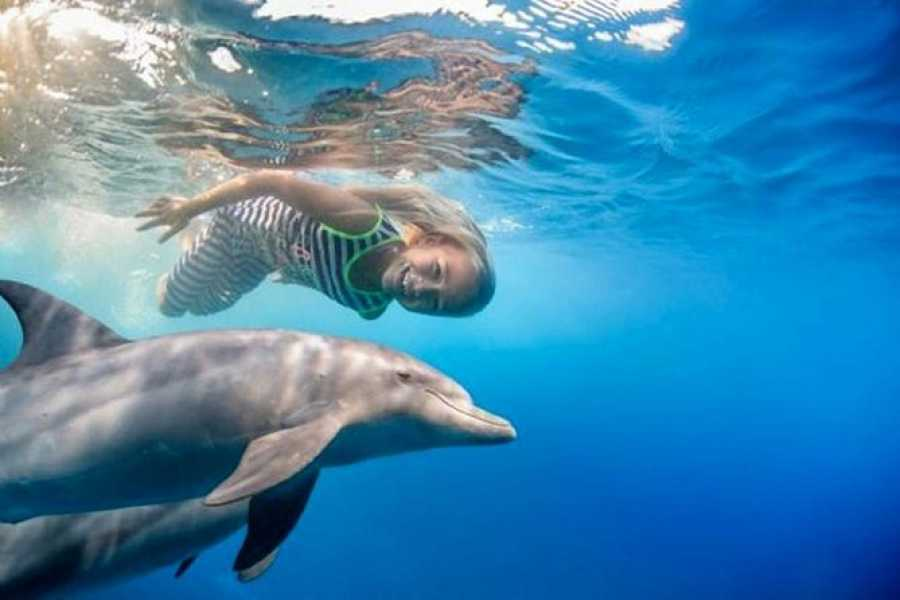 Daily tours Egypt Dolphin house snorkeling trip from Sahel Hasheesh
