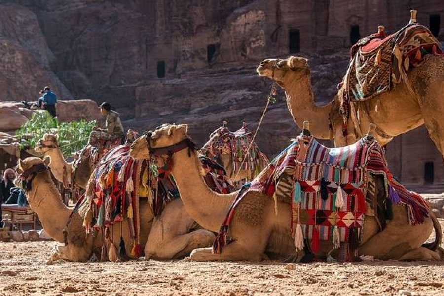 Deluxe Travel 7 Days Egypt and Petra tour