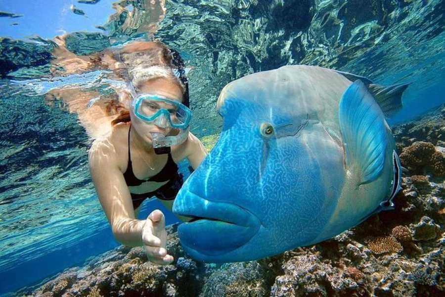 Daily tours Egypt Giftun Island Snorkeling Tours in Makadi