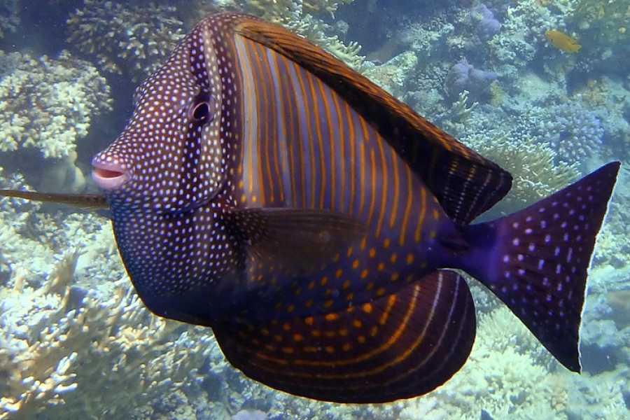 Daily tours Egypt Sharm El Naga Bay Snorkeling Trip From Makadi