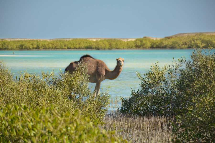 Marsa alam tours 2 day itinerary Marsa Alam from Hurghada