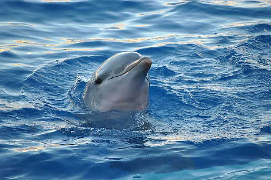 Daily tours Egypt Sataya Dolphin Reef Overnight Snorkeling Trip From Port Ghalib