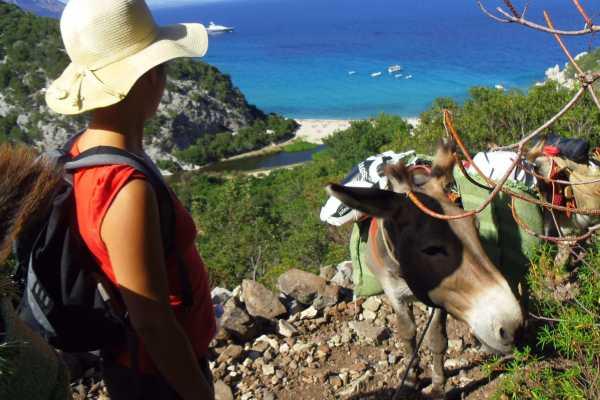3 giorni e 2 notti accompagnati dagli asini nella costa tra Cala Gonone e Baunei