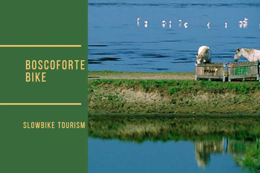 Ravenna Incoming Convention & Visitors Bureau Boscoforte Bike