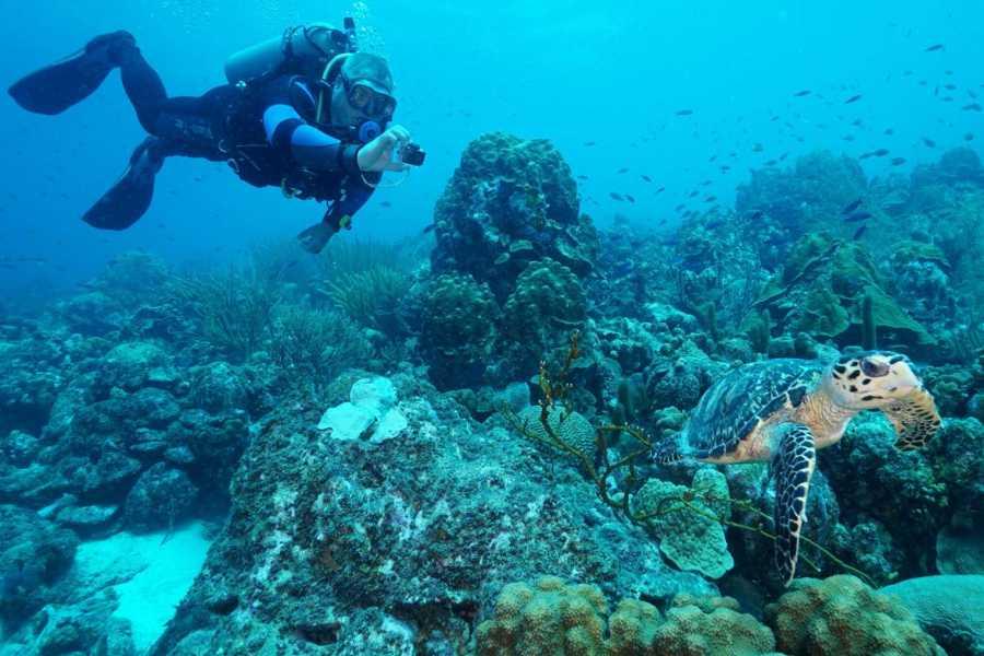 Coral divers 1 geführter Tauchgang am Hausriff