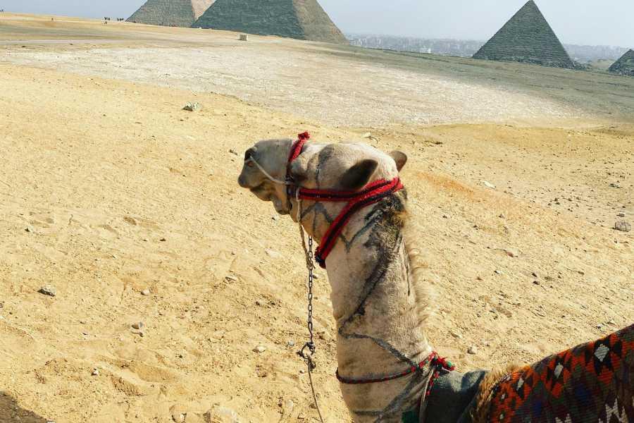 EMO TOURS EGYPT 12 Day Tour for Simone Koole Package Cairo, Aswan & Luxor