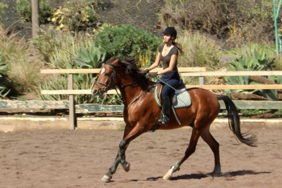 Hipica Canaria Clases de Equitación