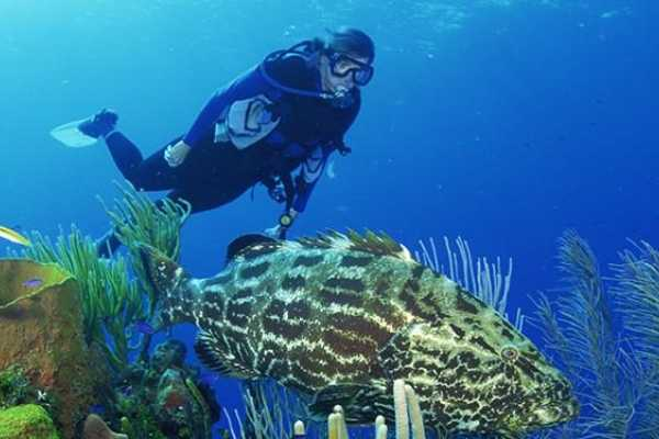 10 Dives Package