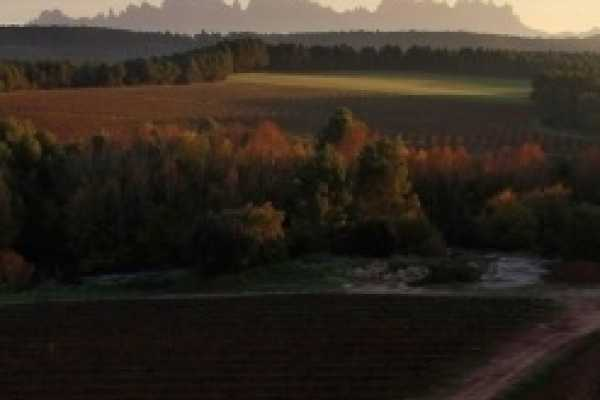 ICONO Serveis Culturals Cava, tapas y Vino. Traditional Local Wineries Tours