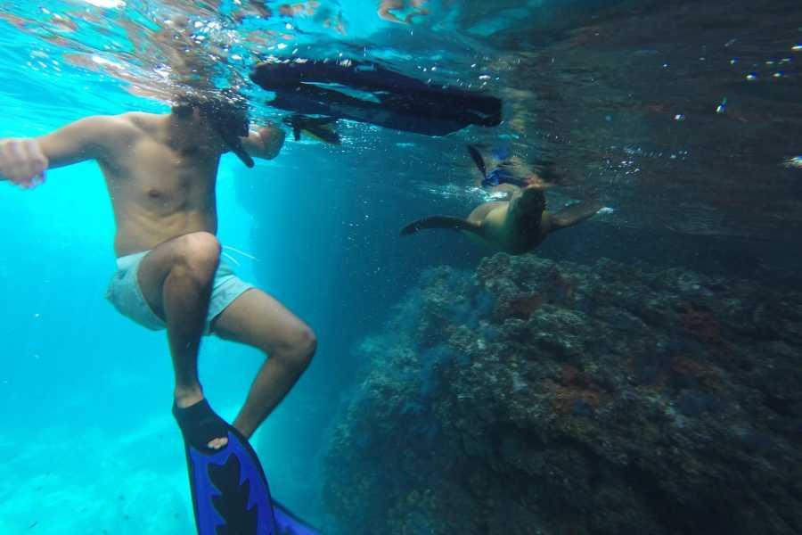 Pacifico Tours SA de CV La Paz Espiritu Santo Snorkeling