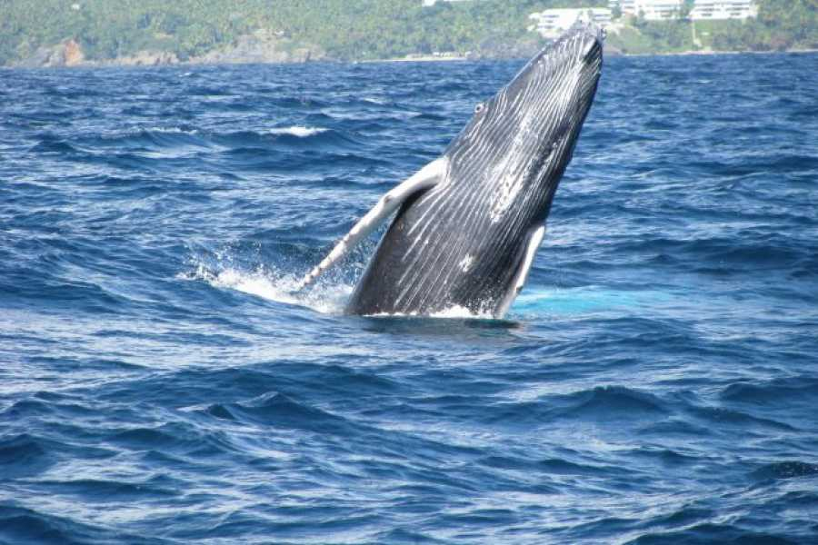 Tour Samana With Terry HOTEL EXCURSION #4:  Whales and Bacardi Beach (Cayo Levantado) Excursion