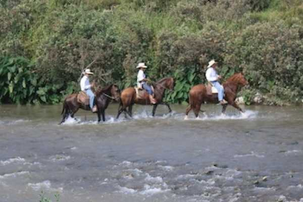 1 hour of Peruvian Paso Horseback ride by the valley