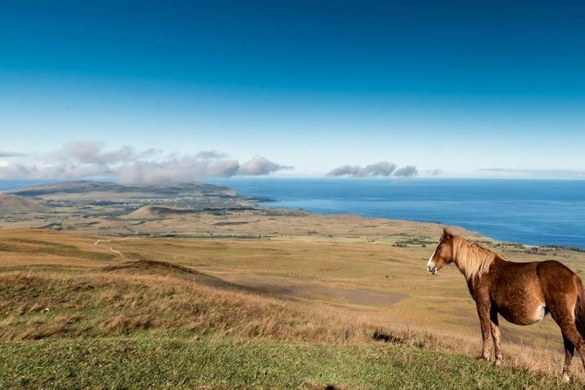 Green Island Tours-Easter Island Terevaka tour