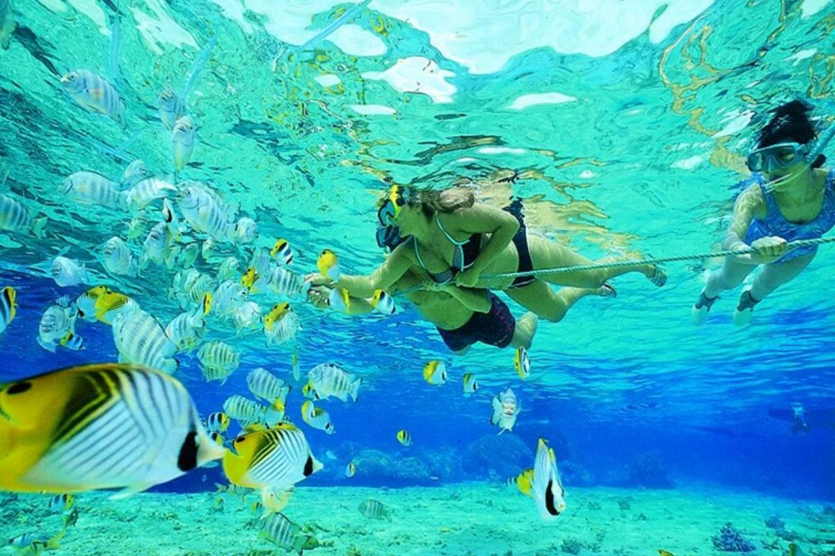 Blue Waters Caribbean Adventures Corales Snorkel Trip