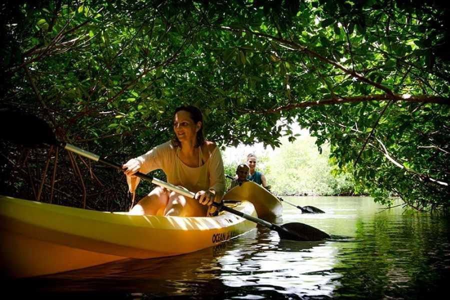 Mangrove Center The One-Hour Kayak Tour