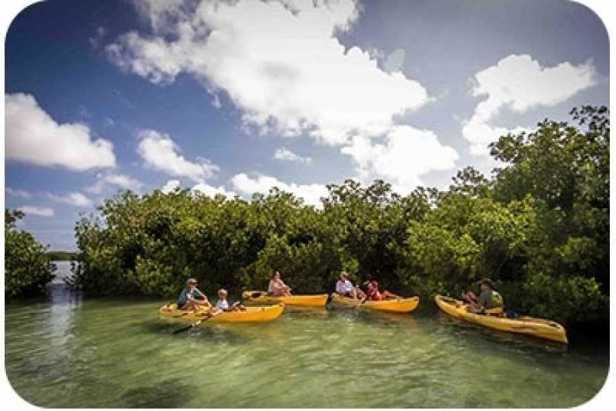 Mangrove Center The Two-Hour Kayak Tour