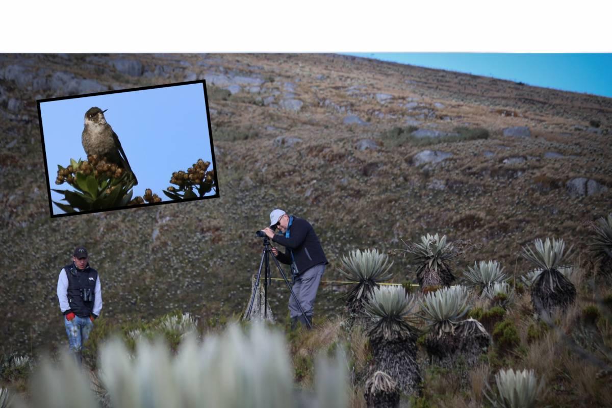 Andes Ecotours Birdwatching: Sumapaz Páramo