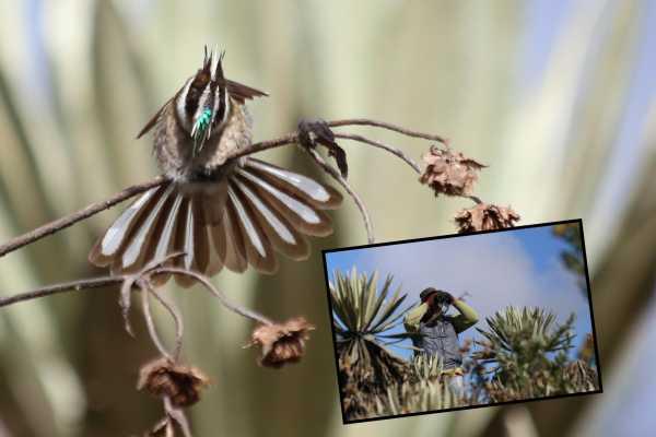 Andes Ecotours Sumapaz Páramo Birdwatching