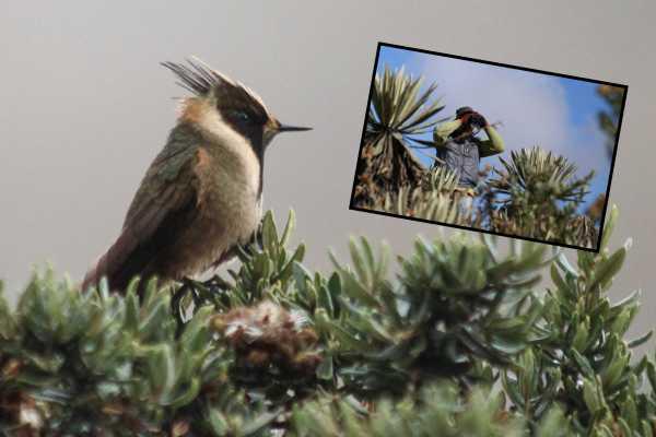 Andes Ecotours Páramo Birdwatching