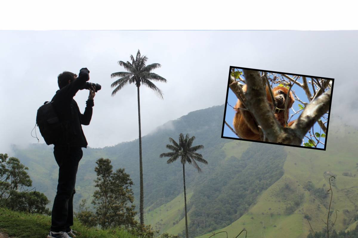 Andes Ecotours Cocora Valley & Coffee Lands (4 days)