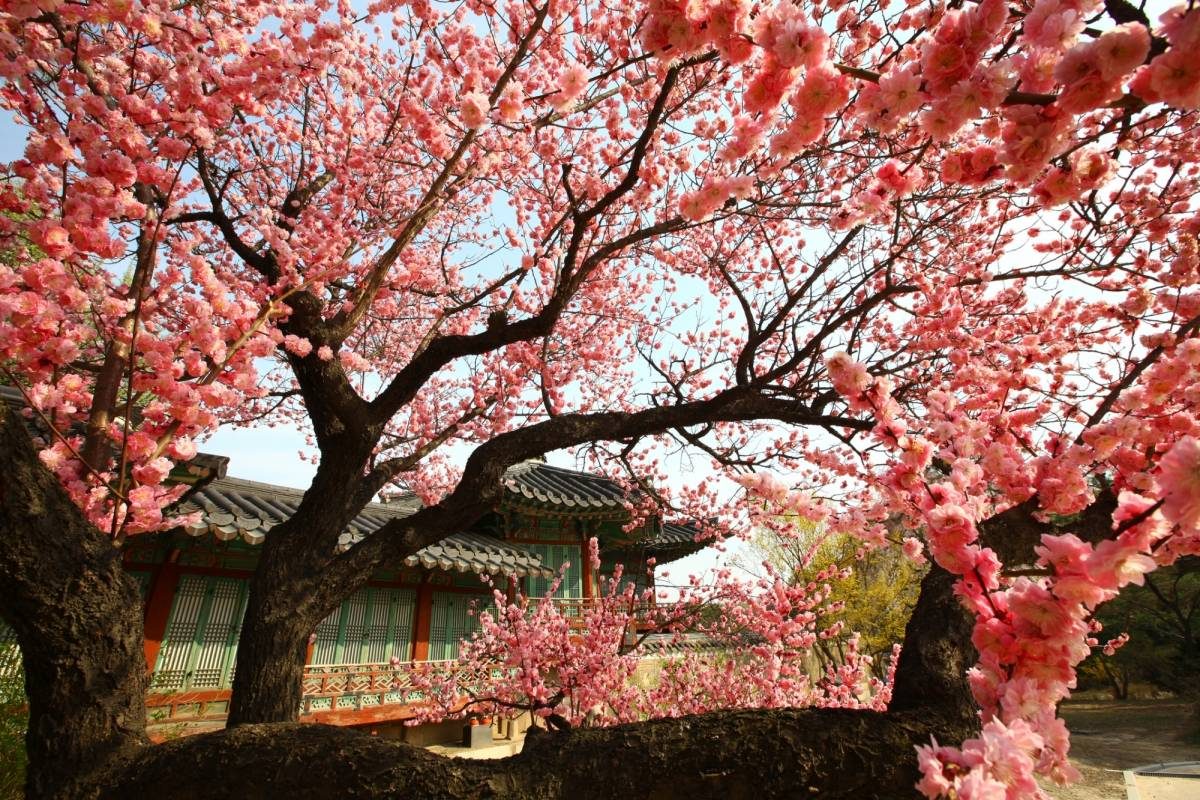 Kim's Travel 44 韓国料理教室& 昌徳宮 (チャンドックン) & 南山伝統韓屋村
