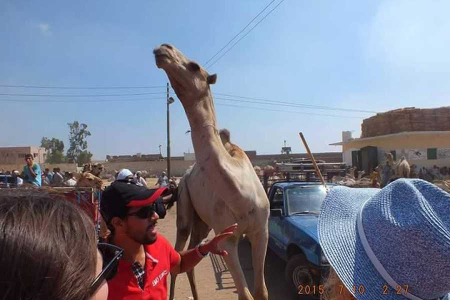 EMO TOURS EGYPT Camel market day tour in Cairo