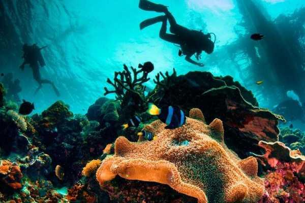 Pacifico Tours SA de CV World Explorer Day Dive