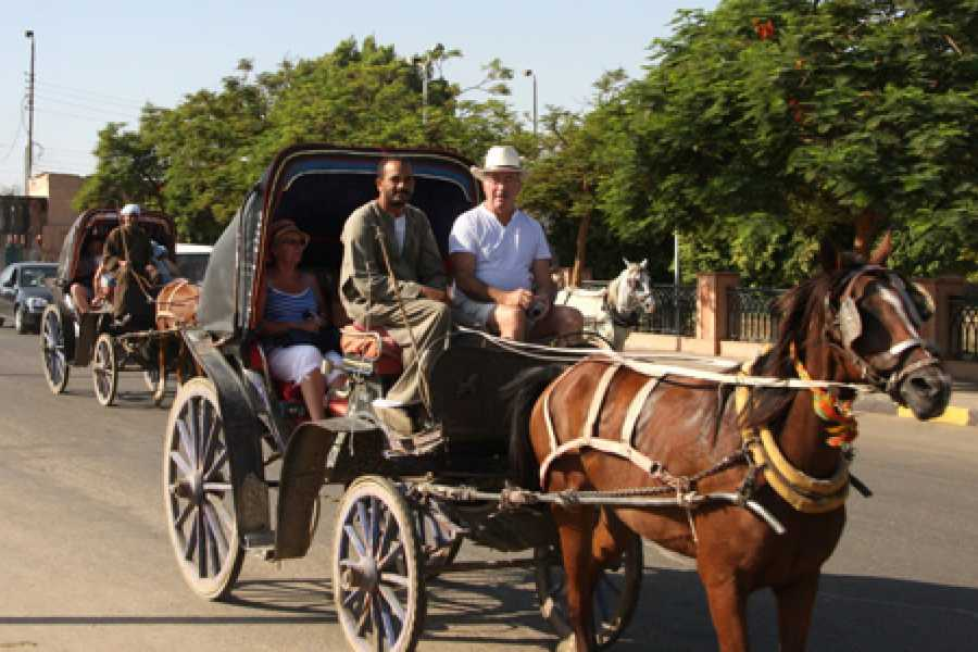 EMO TOURS EGYPT Luxor City tour by Horse Carriage