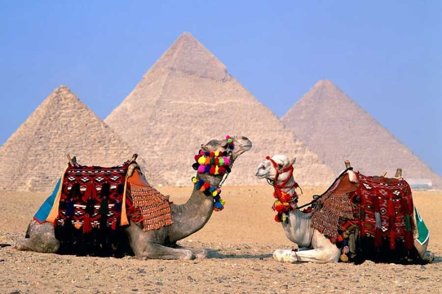EMO TOURS EGYPT Day tour to Cairo from Sharm El Sheik by plane