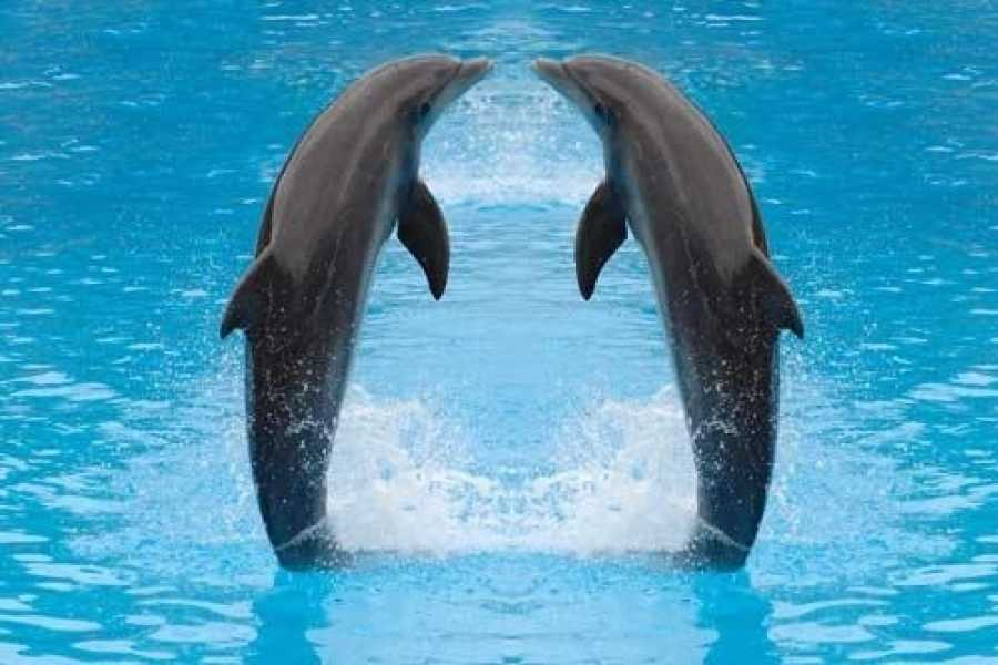 EMO TOURS EGYPT Dolphin show in Sharm El Sheikh