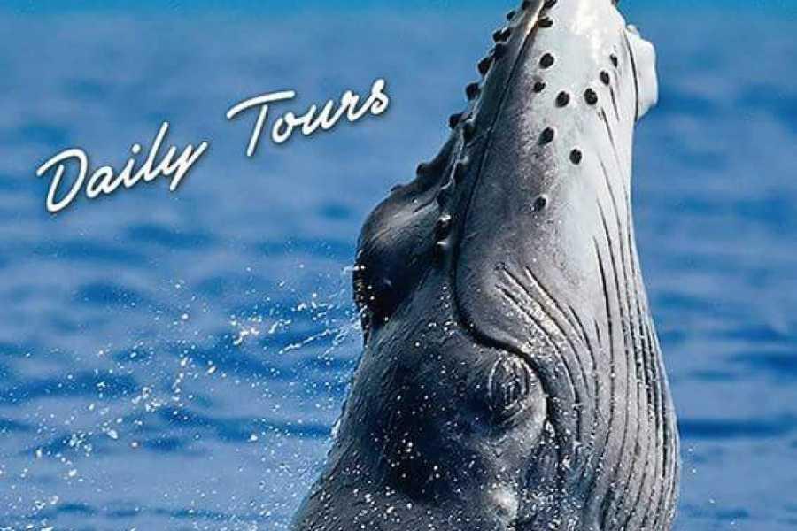 Go Montanita Observacion de Ballenas