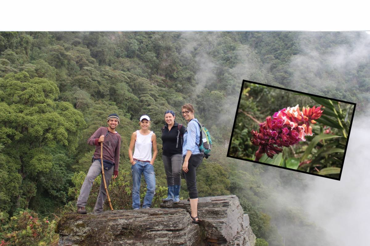 Andes Ecotours Chicaque Cloud Forest Reserve (2 - 3 days)