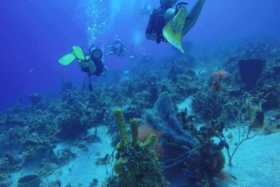 Marina Blue Haiti Double Tank Boat Diving Excursion