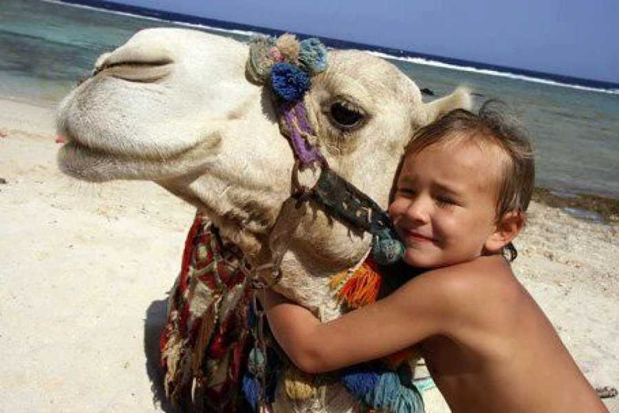 EMO TOURS EGYPT Budget Egypt Holiday package for 5 Days 4 Nights Cairo,Aswan and Luxor