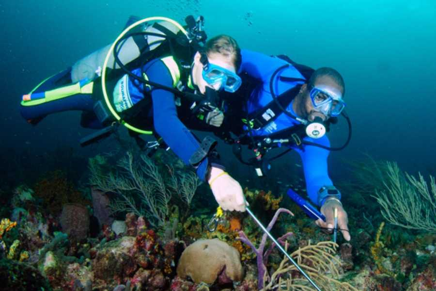 Aquanauts Grenada 1. Try Scuba Dive