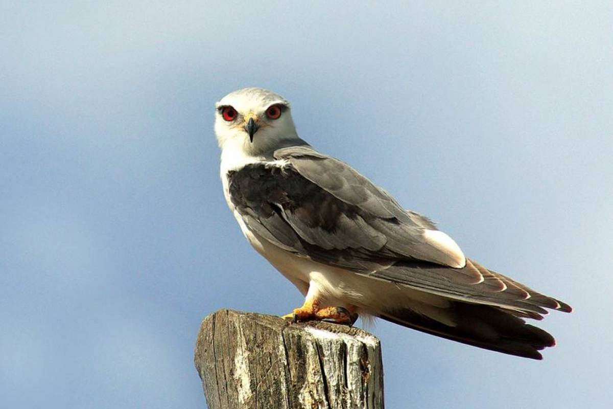 Emotion - life on adventure Birdwatching - Entradas