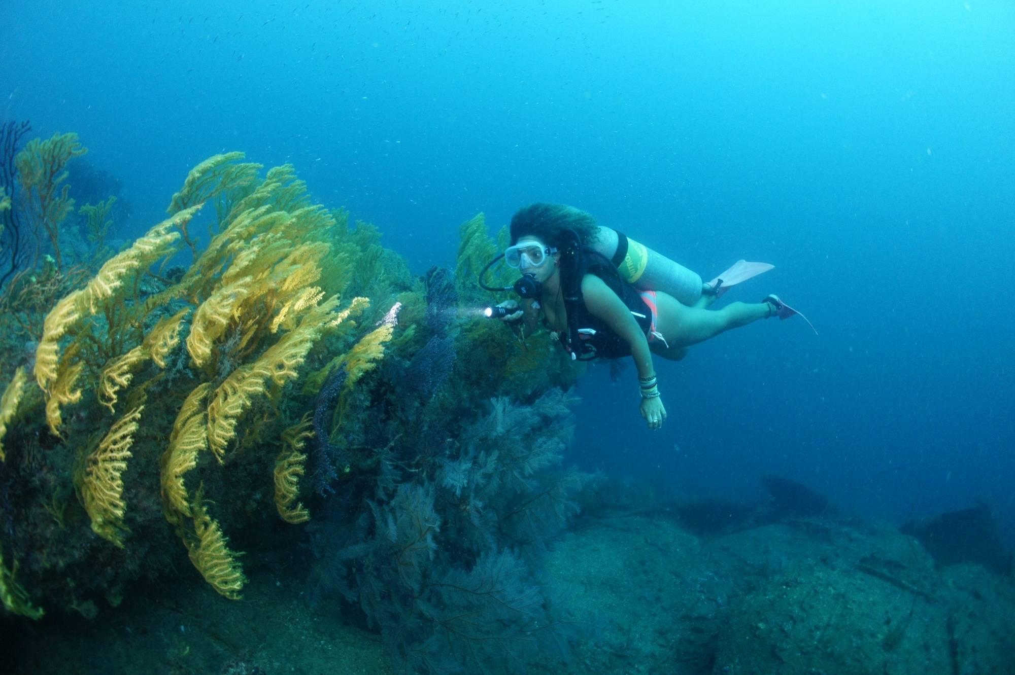 5 Sdi Computer Nitrox Diver Aquanauts Grenada