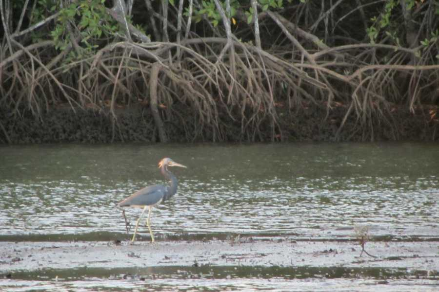 Kelly's Costa Rica Estuary Tour