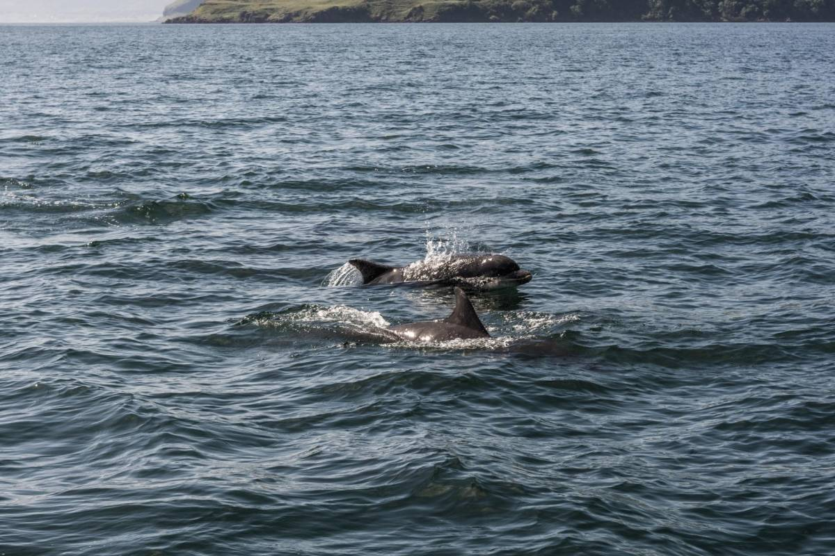 Ardnamurchan charters Loch Sunart Private Charter - 4 Hour