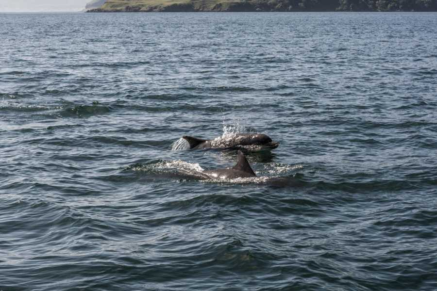 Ardnamurchan charters Loch Sunart Private Charter - 4 Hour