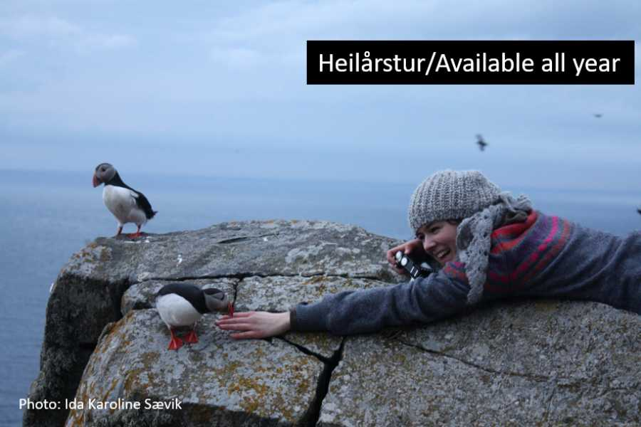 Travel like the locals (Møre og Romsdal) Round trip to Runde Bird Island