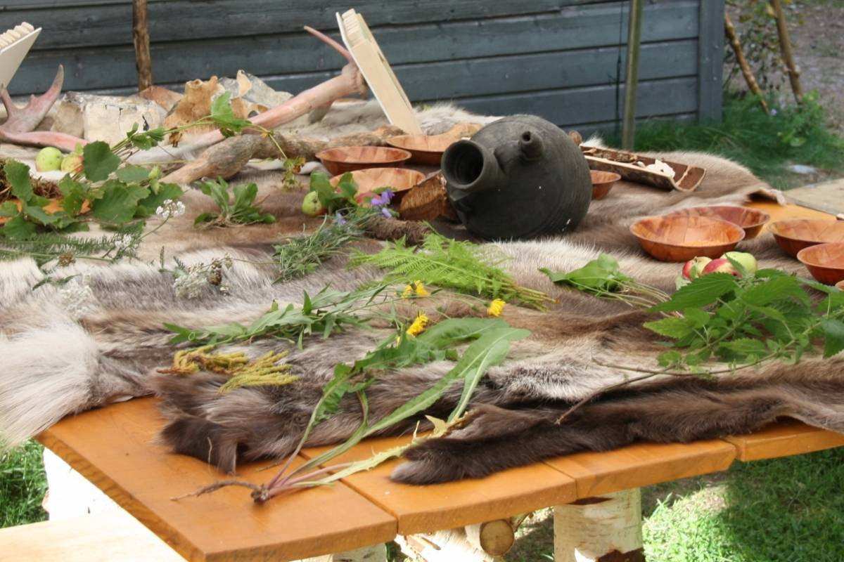 B-Nature A/S EDIBLE PLANTS AND INSECTS