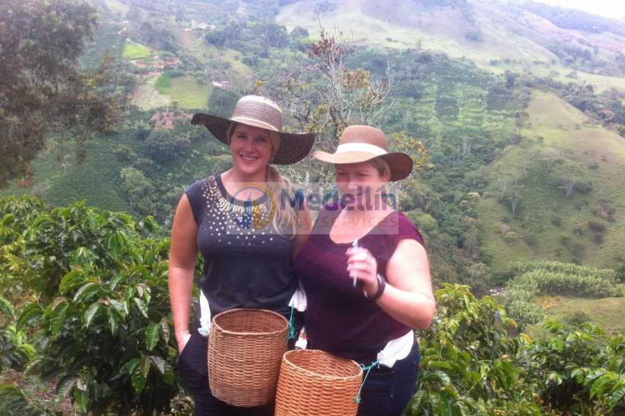 Medellin City Tours Medellin City Combo Tour and Jerico Coffee Region Including Lunch