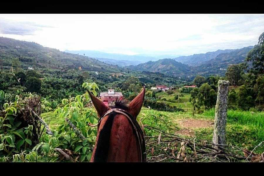Medellin City Services BoGo Tour: 	BOOK HORSE RIDE AND GET FREE SIGHTSEEING TOUR