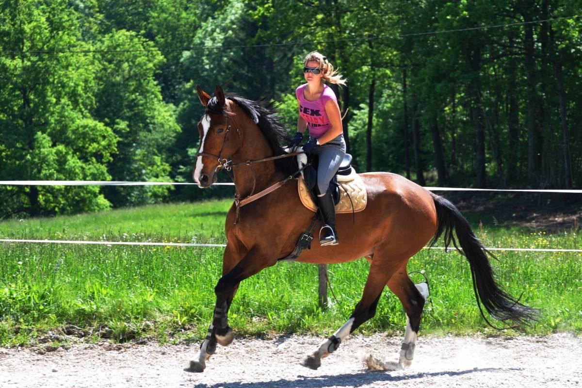 Funturist PE Bled Horseback riding Bled