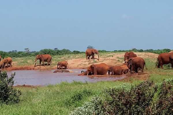 10 days Kenya and Uganda Wildlife Adventure